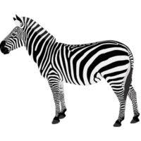 free_download_real_zebra_cartoon_clipart_image