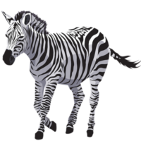 free_download_white_black_zebra_transparent_background