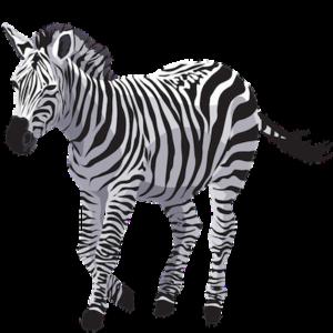 free_download_white_black_zebra_transparent_background