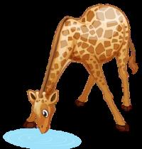 download_vector_giraffe_drinking_water_free_clipart