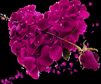 free-download-beautiful-pink-rose-petals-rose-heart