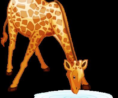 free-download-cartoon-animal-giraffe-drinking-water-clipart